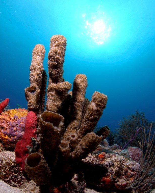 A view from below at Sunkist Reef off of Broward County. Photo: Joe Marino