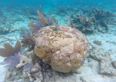 Example of a photo sent into SEAFAN network along with a report of coral disease.