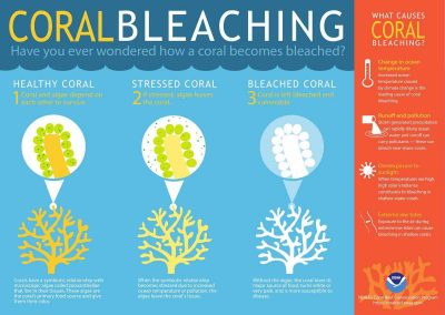 Coral Bleaching Infographic