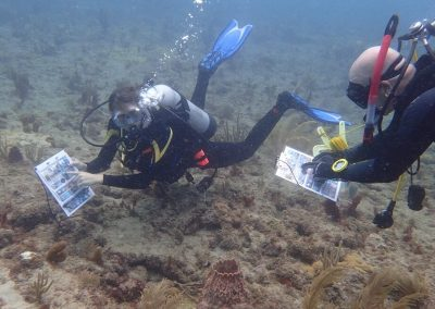 In-water trainings take divers in the field to practice identifying healthy, bleached, and diseased coral.