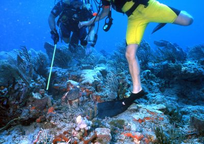 Improper snorkeling and diving practices, as well as dive equipment, can cause damage to fragile coral.