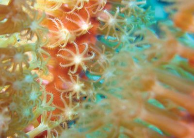 Corals Image