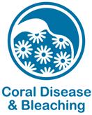Coral Disease & Bleaching