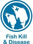 Fish Kill and Disease